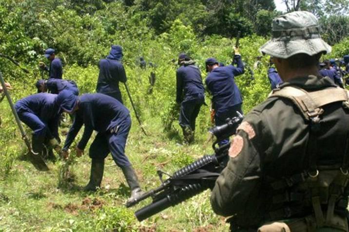 Los pitufos' de la erradicación manual de coca | Vanguardia.com
