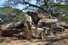 Ocho núcleos activos deforestan el bosque natural en Colombia