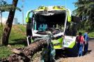 Choque de bus contra una palma dejó un herido