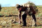 Con un 'agro robot' buscan mejorar la siembra del frijol