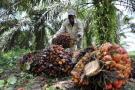 Palmeros le apuntan a un cultivo sostenible