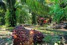 Palmicultura fuente de riqueza sostenible para la región