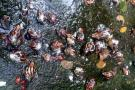 Brote sin control de caracol africano en San Gil