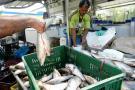 En temporada de fin de año hay abundancia de pescado en el Puerto