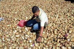En Santander, al igual que en todo el país, el manejo de productos en poscosecha, es uno de los factores de mayor incidencia en la pérdida de alimentos de consumo humano.