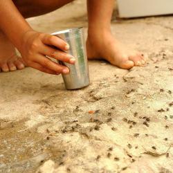 Los ciudadanos esperan que las autoridades ambientales investiguen las causas de la aparición de las moscas.