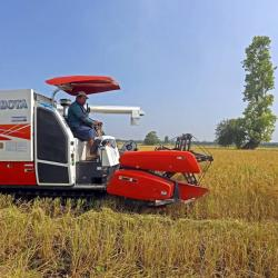 El arroz riego en Tolima y Huila presenta el mayor grado de adopción del Amtec, con 78% y 54% respectivamente.