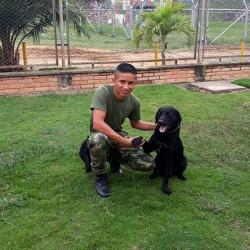 Timón, el héroe canino del Ejército que murió en un combate con el Eln