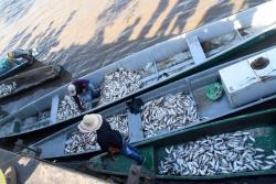 Imágenes de la 'subienda' de pescado en Santander