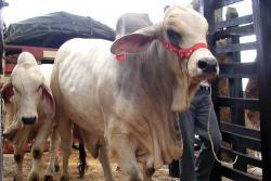 Desmienten muerte de dos niñas por consumir carne con aftosa en Santander