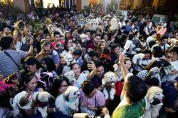 Bendiciones para las mascotas en Filipinas
