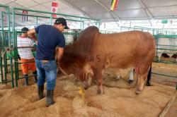La feria cebuina más grande de todos los tiempos en Santander