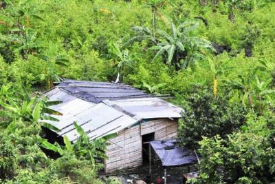 """Venezuela exhorta  a Colombia """"asumir responsabilidad"""" por daños globales del narcotráfico"""