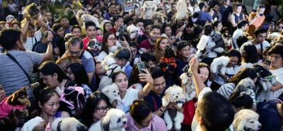 En honor a San Francisco de Asís centenares de filipinos bendijeron sus mascotas.