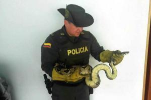 Suministrada por Policía Ambiental Mebuc /VANGUARDIA LIBERAL